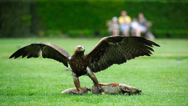 Découverte en famille de la ville de Rennes et visite au Zoo de la Bourbansais
