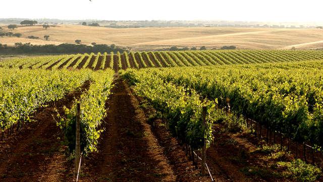 Uitje met bezoek aan wijnmakerij in Alentejo