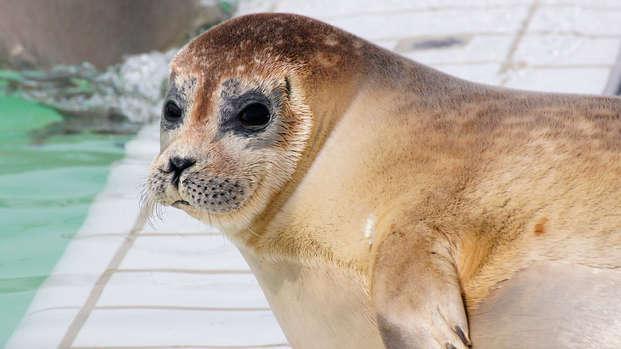 Visite du centre de réhabilitation et de recherche des phoques ou découverte des vasières
