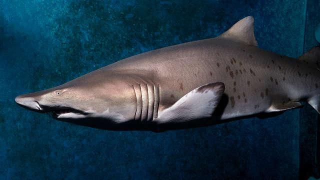Week-end en famille ou entre amis à Pontorson avec entrée au Grand Aquarium de Saint-Malo