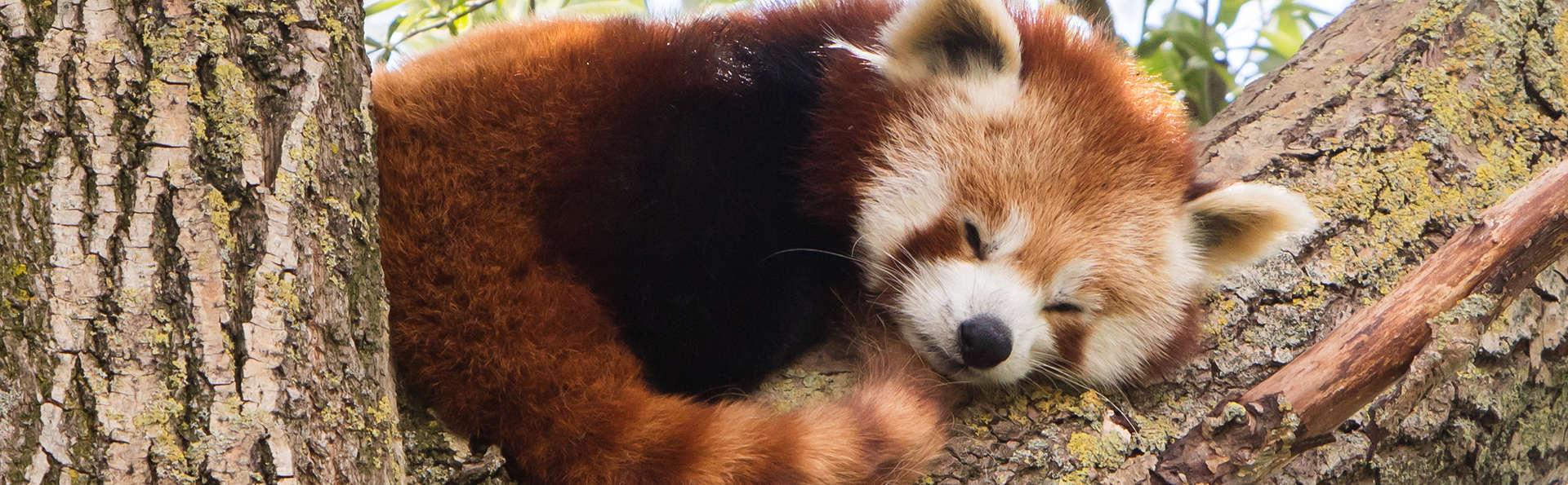 Découvrez le zoo d'Aix-la-Chapelle en famille