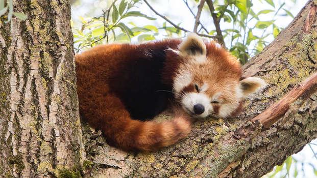 Ontdek de dierentuin van Aken met het gezin