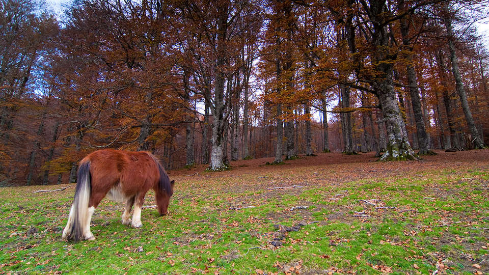 Hostal Jai Alai - Edit_Parque-Natural-Aralar.jpg