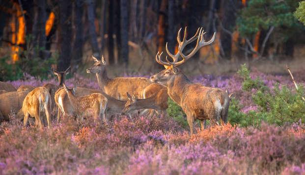 Voorjaarsspecial: Puur genieten en ontspannen op de prachtige Veluwe