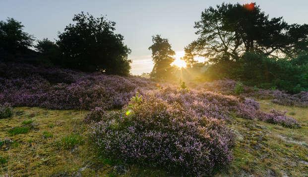 Heerlijk ontspannen en genieten van de natuur op de Veluwe
