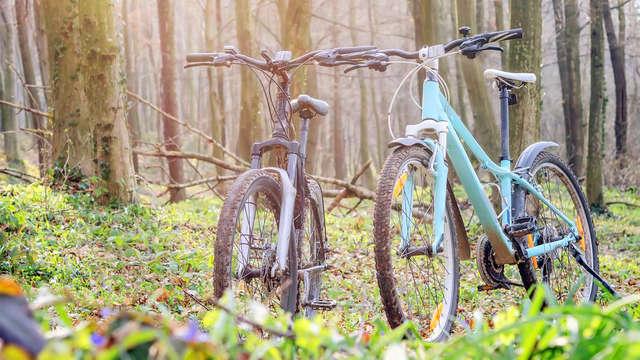 1 Alquiler de bicicletas para 2 adultos
