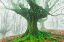 Parque Natural de Gorbea -