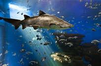 Palma Aquarium -