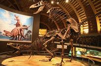 Museo del Jurásico de Asturias -