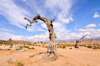 Desierto de Tabernas -