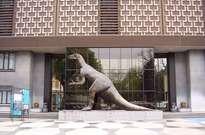 Muséum des sciences naturelles de Belgique -
