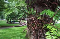 Jardin botanique de Liège -