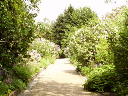 Jardin botanique Jean Massart