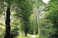 Haarlemmerhout -