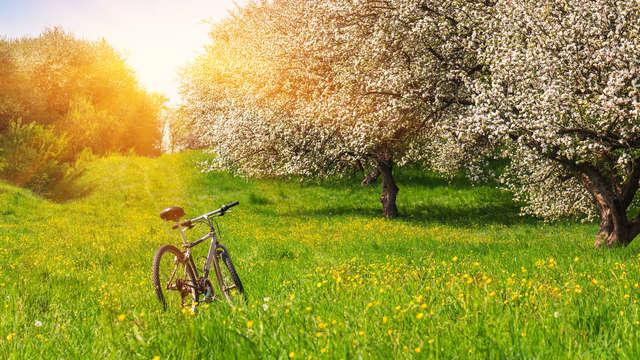 Découvrez les magnifiques environs de Tongres à vélo (à partir de 2 nuits)