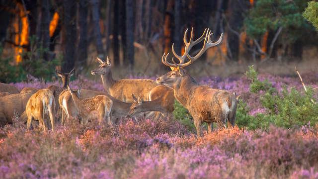 Uitrusten in de Veluwse bossen inclusief dagschotel (vanaf 2 nachten)