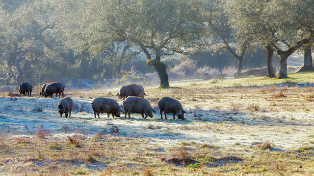 Escapada rural con encanto en la Sierra de Aracena, Huelva