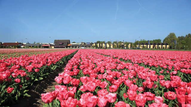 Découvertes à vélo près d'Alkmaar