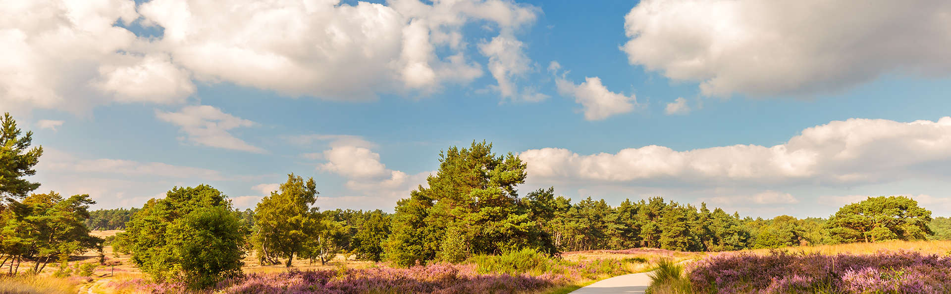 Even de stress ontsnappen in de Veluwe