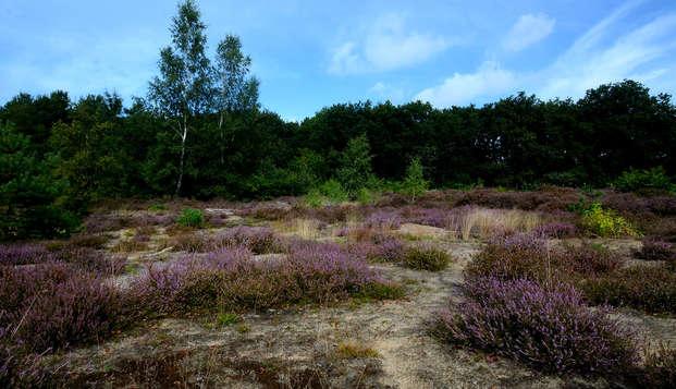 Kom tot rust in de Drentse natuur