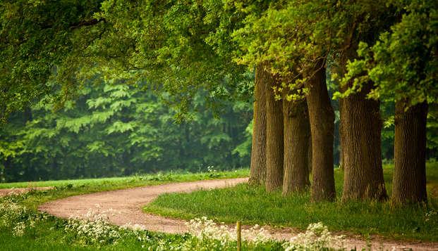 Promenade à vélo dans les bois de Gueldre