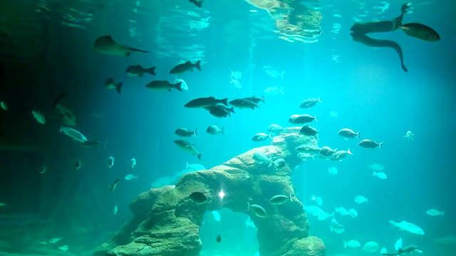 Descubre el Museo Marítimo del Cantábrico en esta Escapada con Botella de Cava y Bombones