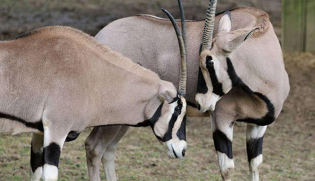 Découvrez Tours et profitez d'une journée au ZooParc de Beauval