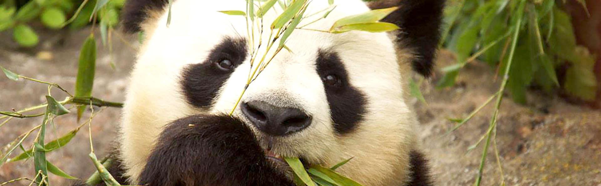 Séjour en famille et entrées au zoo de Beauval (à partir de 2 nuits)