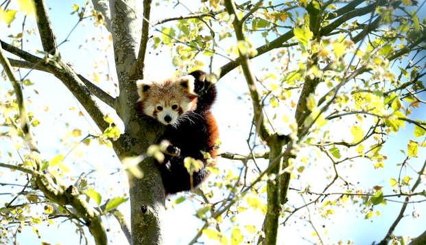 Séjour insolite avec visite du ZooParc de Beauval (à partir de 2 nuits)