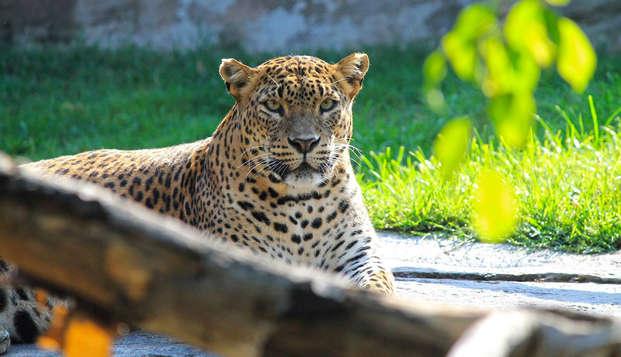 Séjour à thème : Vivez une aventure à Bioparc Valencia