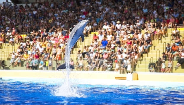 Parti alla scoperta delle otarie e dei delfini nel parco Marineland a Cannes