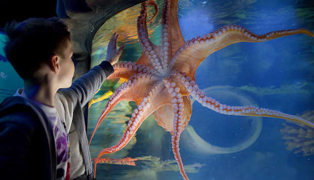 Weekend in famiglia con ingresso all'Aquarium Sea Life vicino a Disneyland® Paris