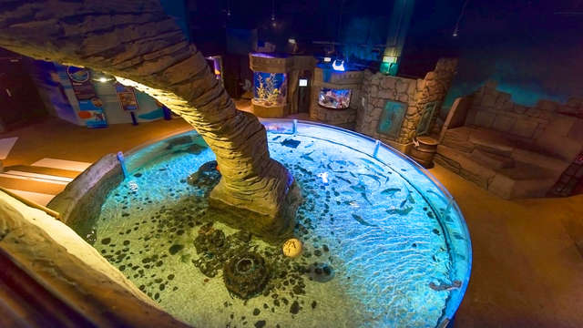 Diversión en familia con entrada al acuario Sea Life y alojamiento cerca de Disneyland Paris