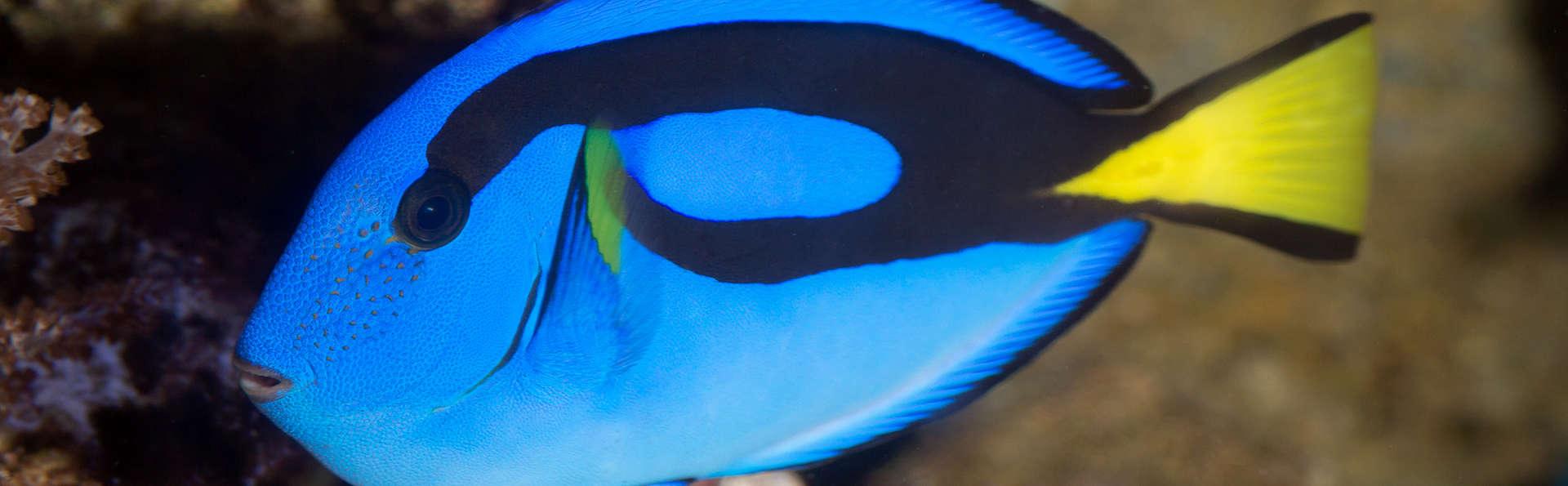 Escapada en familia: Descubre las maravillas de Aquarium de Barcelona