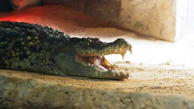 Visita el acuario más grande de Europa y alójate en este exclusivo hotel en el corazón de Zaragoza