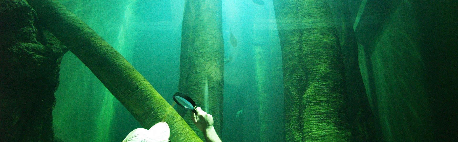 Découvrez les trésors de Saragosse et son aquarium