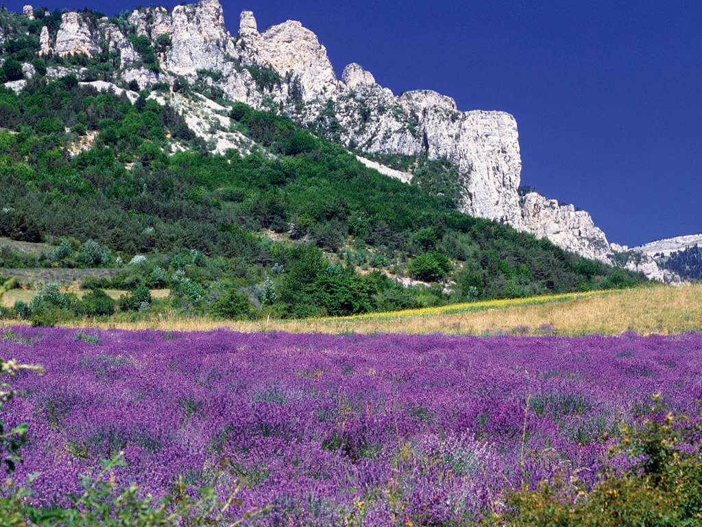 Séjour Alpes-de-Haute-Provence - Week-end découverte à Manosque  - 3*