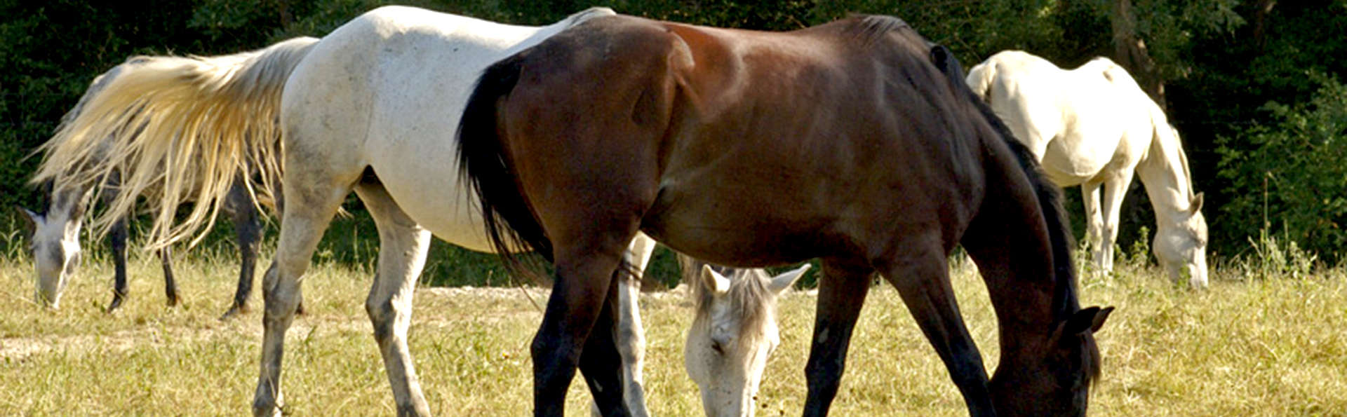 Agriturismo Il Felcino - Edit_Horses3.jpg
